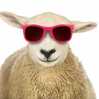 It's cool to buy wool #Naturally - Smiling sheep with sunglasses